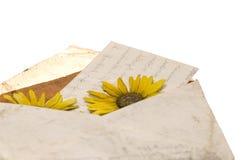 list wyciskany kwiat Obraz Stock