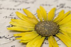 list wyciskany kwiat Zdjęcie Stock