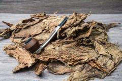 Lista tytoń Zdjęcie Royalty Free