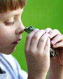 Listen Here Frog. Upclose photo of a little boy going nose to nose with a frog stock images