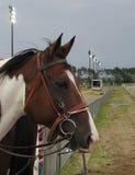 Listening Horse Stock Photos