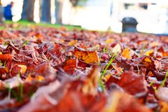 Listopadów kolory w słońcu obraz stock