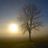Listopad mgła przychodzi Zdjęcia Royalty Free