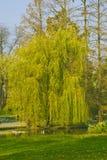 listopad park Zdjęcie Royalty Free