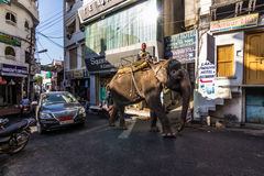 Listopad 07, 2014: Słoń w starym miasteczku Udaipur, India Obraz Stock