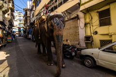 Listopad 07, 2014: Słoń w starym miasteczku Udaipur, India Fotografia Royalty Free