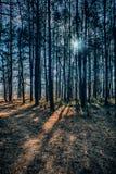 Listopadu krajobraz Zdjęcia Stock
