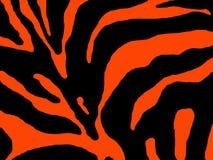 Listras alaranjadas da zebra Imagem de Stock Royalty Free