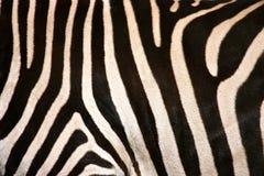 Listras do flanco da zebra imagem de stock
