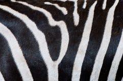 Listras em uma pele da zebra imagens de stock royalty free
