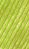 Listras pasteis verdes do fundo imagem de stock