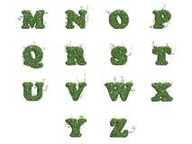 Listy M - Z zielony bluszcz opuszcza Zdjęcia Stock