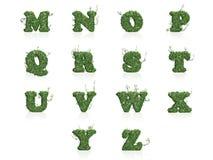 Listy M - Z zielony bluszcz opuszcza z odbiciem Obraz Royalty Free