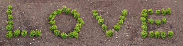 Listy robić żywe rośliny tworzy słowo miłości zdjęcia stock