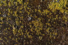 Liszaj betonowa tekstura Zdjęcia Royalty Free