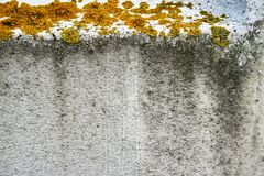 liszaj i inne rośliny na grunchy ścianie obrazy stock
