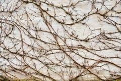 liszaj i inne rośliny na grunchy ścianie obraz stock