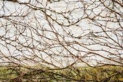 liszaj i inne rośliny na grunchy ścianie zdjęcie stock