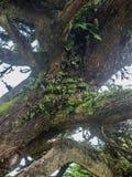 Liszaj i mech na drzewnym bagażniku zdjęcia stock