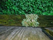 Liszaj Na drewna ogrodzeniu zdjęcia stock