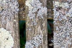 Liszaj na drewnianym deseczki zbliżeniu zdjęcie royalty free