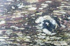 Liszaj na drewnianym tle pełny ramowy makro pizza strzał Zdjęcie Stock