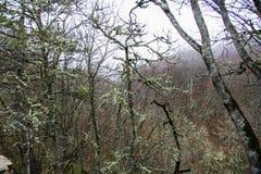 Liszaj na drzewach fotografia stock