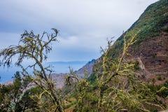 Liszaj na drzewach w losie angeles Gomera obrazy royalty free