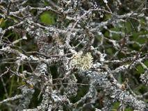 Liszaj na drzewie Obrazy Royalty Free