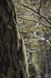 Liszaj na drzewie zdjęcia royalty free