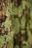 Liszaj na drzewie zdjęcia stock