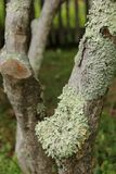 Liszaj na drzewie zdjęcie stock
