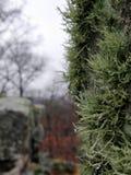 Liszaj na drzewie obraz stock