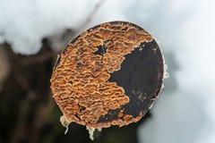 Liszaj na drzewnym fiszorku zdjęcia stock