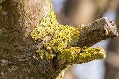 Liszaj Na Gałęziastym drzewie zdjęcie stock