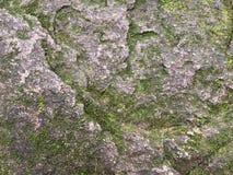 Liszaj na kamiennej ściany teksturze Fotografia Royalty Free
