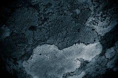 Liszaj na rockowego abstrakcjonistycznego background/Abstrakcjonistycznym tle liszaj, kamień i Szorstki tekstury tło/ Obrazy Royalty Free