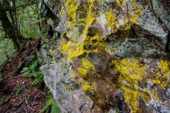 Liszaj na skałach w Great Smoky Mountains zdjęcie stock