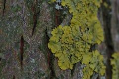 Liszaj r na barkentynie drzewo Strza?u zamkni?ty up fotografia royalty free