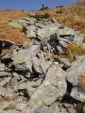 Liszaj Ukraińscy Carpathians Mech i algi na skałach Fotografia Royalty Free