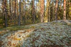 Liszaj w lesie zdjęcia stock