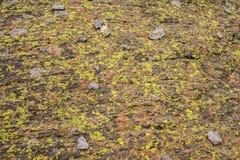 Liszaj zakrywająca skała obraz stock
