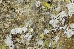 Liszaj zakrywająca skała obrazy royalty free