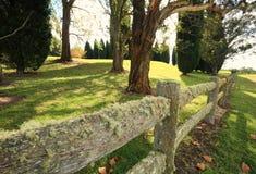 Liszaj zakrywający ogrodzenie Zdjęcie Stock