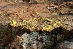 LISZAJU dorośnięcie NA krawędzi skała Obraz Stock