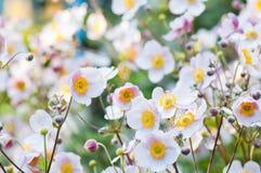 LIT από τα λουλούδια φωτός του ήλιου στοκ εικόνες με δικαίωμα ελεύθερης χρήσης