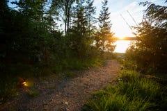 Lit тропы с свечами Tealight в лесе Стоковое Изображение RF