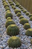 Lit avec des cactus dans la plage de ville Photo stock