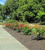 Lit de chemin de frontière des roses Photographie stock libre de droits