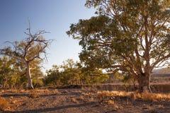 Lit de crique sec. Chaînes de Flinders. Australie du sud. images libres de droits